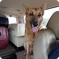 Adopt A Pet :: Dutchess - Gainesville, FL