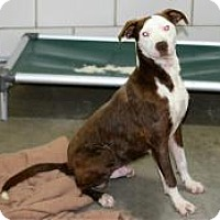 Adopt A Pet :: Alfonzo - Kendall, NY