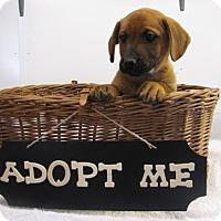 Adopt A Pet :: Mercury - Alstead, NH