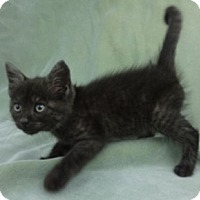 Adopt A Pet :: Slate - Olive Branch, MS