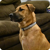 Adopt A Pet :: Marcus - Smithtown, NY