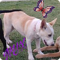 Adopt A Pet :: Nyx - Hesperia, CA