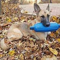 Adopt A Pet :: Kira(CL) - Greensboro, NC