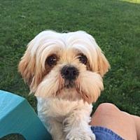 Adopt A Pet :: Nibbly - N. Babylon, NY