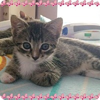 Adopt A Pet :: Truly (COURTESY POST) - Baltimore, MD