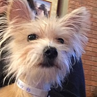 Adopt A Pet :: Blondie - Pleasanton, CA