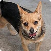 Adopt A Pet :: Venice - Milan, NY