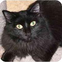 Adopt A Pet :: Priscilla - Lombard, IL
