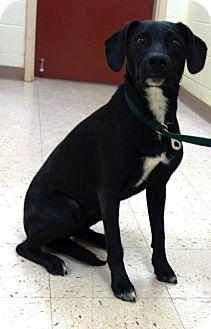Labrador Retriever Mix Dog for adoption in McDonough, Georgia - Jackson