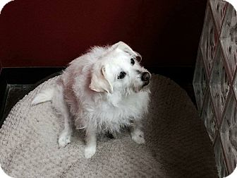 Cairn Terrier Mix Dog for adoption in Phoenix, Arizona - Miss Granny