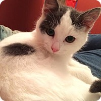 Adopt A Pet :: Fletcher - Eagan, MN