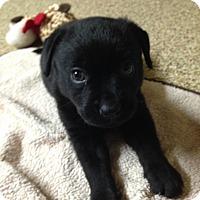 Adopt A Pet :: Lil - Mission Viejo, CA