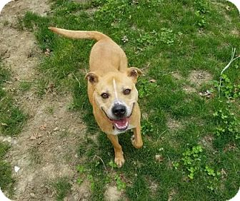 Labrador Retriever Mix Dog for adoption in Peace Dale, Rhode Island - Dallas