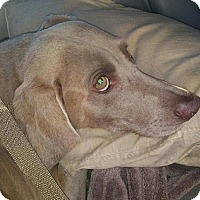 Adopt A Pet :: Emma - Sun Valley, CA