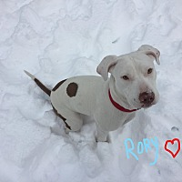 Adopt A Pet :: Rory - Lincoln, CA