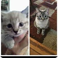 Adopt A Pet :: Skyler - Sterling Hgts, MI