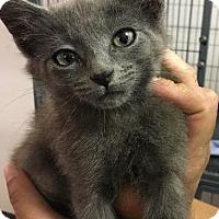 Adopt A Pet :: Bloo - Bourbonnais, IL