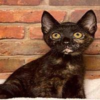 Adopt A Pet :: CASS - Alameda, CA