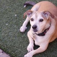 Adopt A Pet :: Frito (was Gerald) - Phoenix, AZ