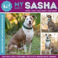 Adopt A Pet :: Sasha - New Port Richey, FL