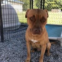 Adopt A Pet :: Savanah - Barco, NC