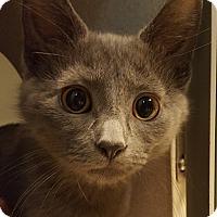 Adopt A Pet :: Carrots - Grayslake, IL