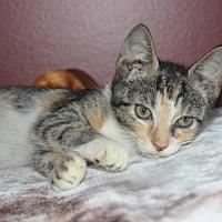 Adopt A Pet :: Ariel (& Dawn) - Herndon, VA
