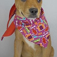 Adopt A Pet :: Cayden - Manning, SC