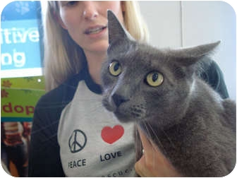 Domestic Shorthair Cat for adoption in San Dimas, California - Ramsey
