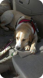 Golden Retriever/Labrador Retriever Mix Dog for adoption in Atlanta, Georgia - Jackson