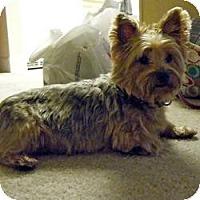 Adopt A Pet :: Precious - Spring Hill, FL