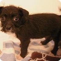Adopt A Pet :: Puck - Sacramento, CA