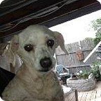 Adopt A Pet :: Ricky - Alliance, NE