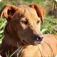 Adopt A Pet :: Julie - Flowery Branch, GA