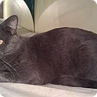 Adopt A Pet :: Sterling - Cranford/Rartian, NJ