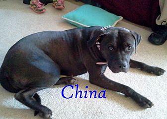 Pit Bull Terrier Mix Dog for adoption in Halifax, North Carolina - China