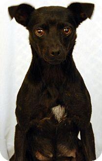 Feist Mix Dog for adoption in Newland, North Carolina - Molly