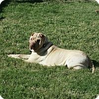 Adopt A Pet :: Naveah - Houston, TX