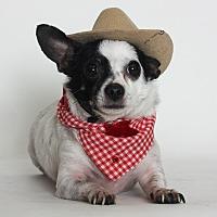 Adopt A Pet :: Bruiser - Stockton, CA