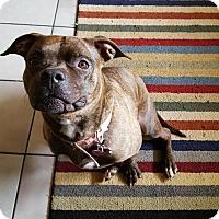 Adopt A Pet :: Missy - Snellville, GA