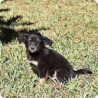Adopt A Pet :: Brendon - South Dennis, MA