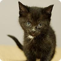 Adopt A Pet :: Lotus - Great Falls, MT