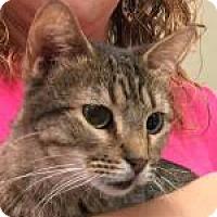Adopt A Pet :: Katydid 7097 - Columbus, GA