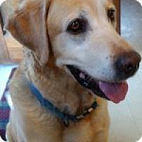 Adopt A Pet :: Mr. Magnum - Torrance, CA