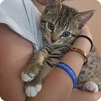 Adopt A Pet :: Remy - Wantagh, NY