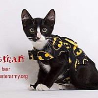 Adopt A Pet :: Batman - Riverside, CA