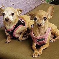 Adopt A Pet :: 3.5 lbs Jade - Encino, CA