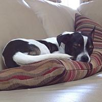 Adopt A Pet :: Jasper - Blue Bell, PA