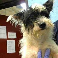 Adopt A Pet :: CINDERELLA - Atlanta, GA