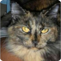 Adopt A Pet :: Maddison - Fort Lauderdale, FL